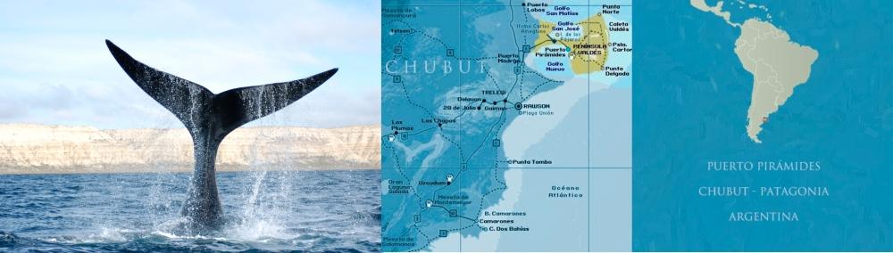 Foto-ballena-Laborat.-de-mamiferos-marinos