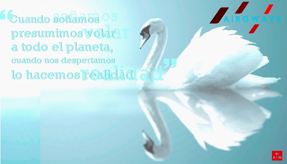 AW-Swan_700655.jpg